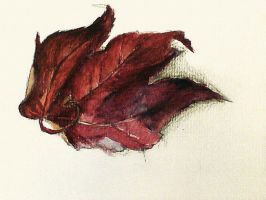 Red leaf by RhynWilliams