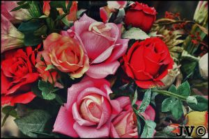 Red Roses by JohnnyVadala