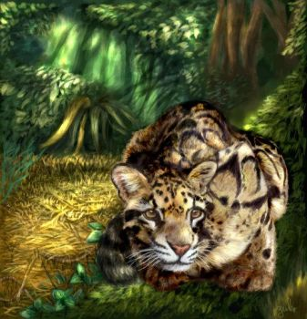 Clouded Leopard by oomu