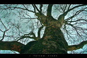 i follow trees by pkoc