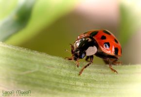 Lady_bug_2 by LeronMasoN