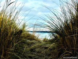 HDR Beach Grass by steelrose13