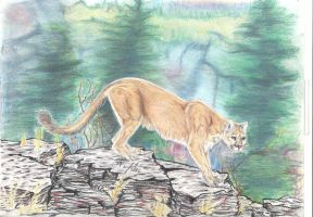 Cougar by Zimriver