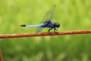Pretty dragonfly 2 by rayna23