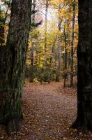 White Mountains  Fall Foliage  196 by FairieGoodMother