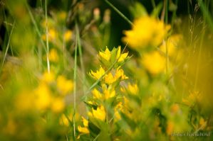 Yellow Nature by fholger