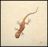 Young gecko by FuriarossaAndMimma