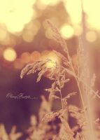 Grass and bokeh by VanillaBoom
