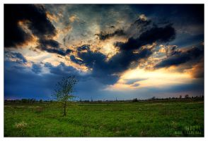 first spring tree by werol