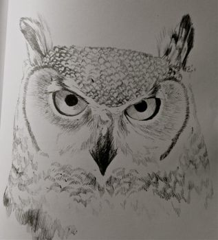 Hey look.. another owl. by SamGuentherArt