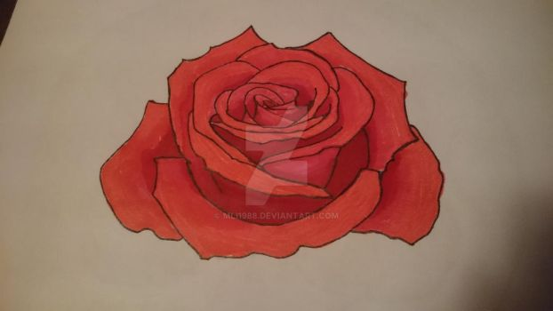 A simple rose, in color by mli1988