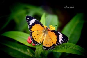 Flying colours (IV). by Phototubby