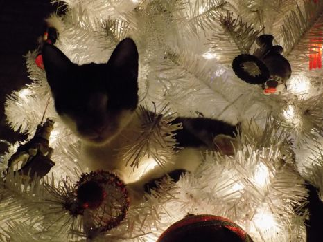 The Cutest Christmas Ornament by Raveande