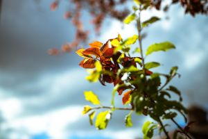 Rusty leaves 2 by kennyagainst