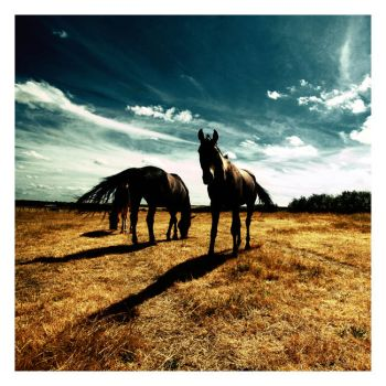 Horse Dynasty by ctrc