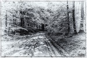 The Road in the woods by wiwaldi24