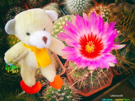 Pretty Bear and his Flower :) by UAkimov09