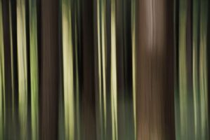 Pines abstraction... by vincentfavre