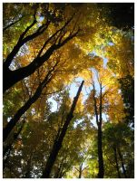 The Canopy by Spankreas