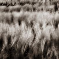 The Wind That Shakes The Barley by DpressedSoul