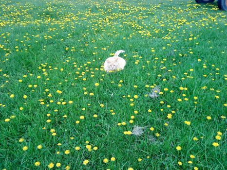 Cats and dandelions 25 by TheCynicalFlowerGirl