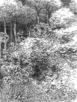Ink drawing serial cultivation by efira-japan