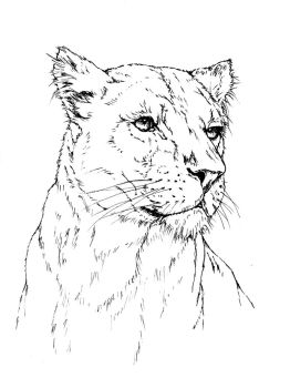 WIP Lioness lines by Adniv