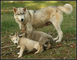 Mother Wolf-Dog and Cubs by greensh