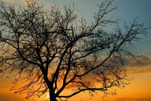 Sunset and Tree by desmo100