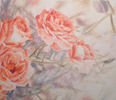 The dear roses by wiegand90