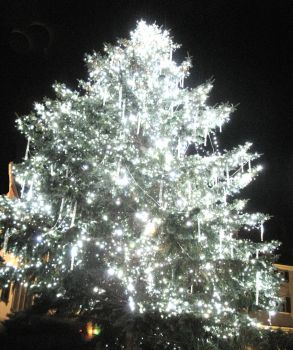 Pretty Lights on the Tree by jellolids