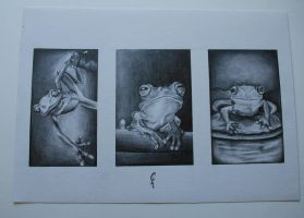 frogs by cicci89