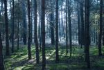 Forest 01 by elanordh-stock