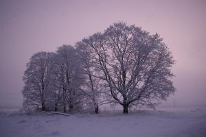Winter morning by ShadowPhotography