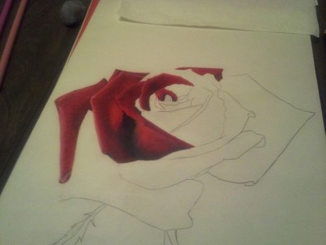Colored Pencil Rose - One by Crafted-DreamScapes