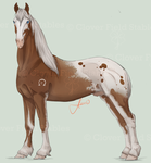.:T's Marcabo 417:. by EquineInc