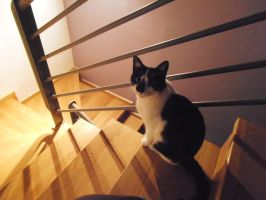 Stairs + cat by Ileva21