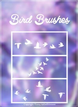 +Bird Brushes by natieditions00