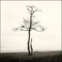 trees sans leaves by fotokultur