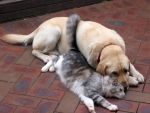 Cat and Dog Love by MiraMarRa8