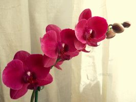 Beautiful orchid by florina23