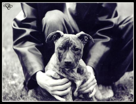 Pitbull and Leather by deathbycanon