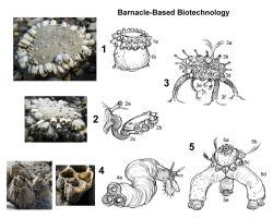 Barnacle-Based Biotech Batteries by thomastapir