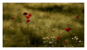 Wheat and Poppies by HorstSchmier