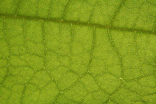 Leaf Cell Pattern by natureguy