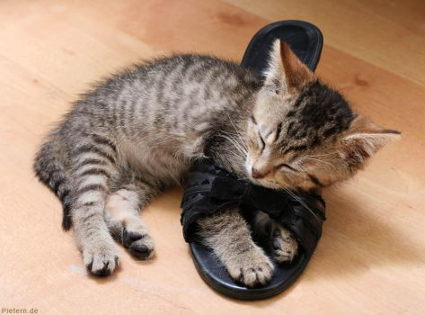Sleeping in my shoes... by hoschie