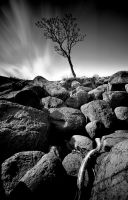 Driftwood by Hollowpoint303