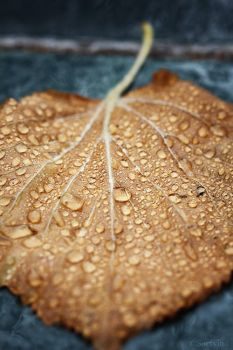Autumn Rain by Sortvind