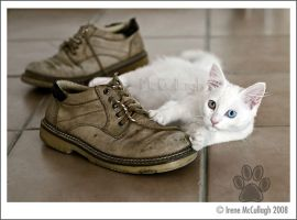 Ziggy and the Old Shoes by substar