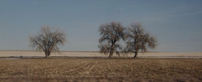 Cottonwoods to the East of 287 by MurielLeeJones